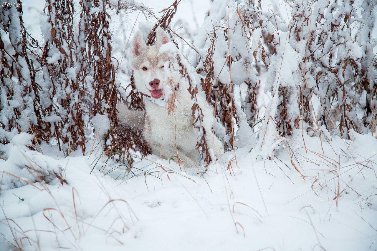 Dan bermain salju.