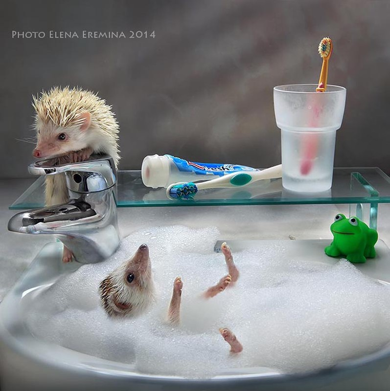 A day in the life of cute hedgehogs - Russia Beyond