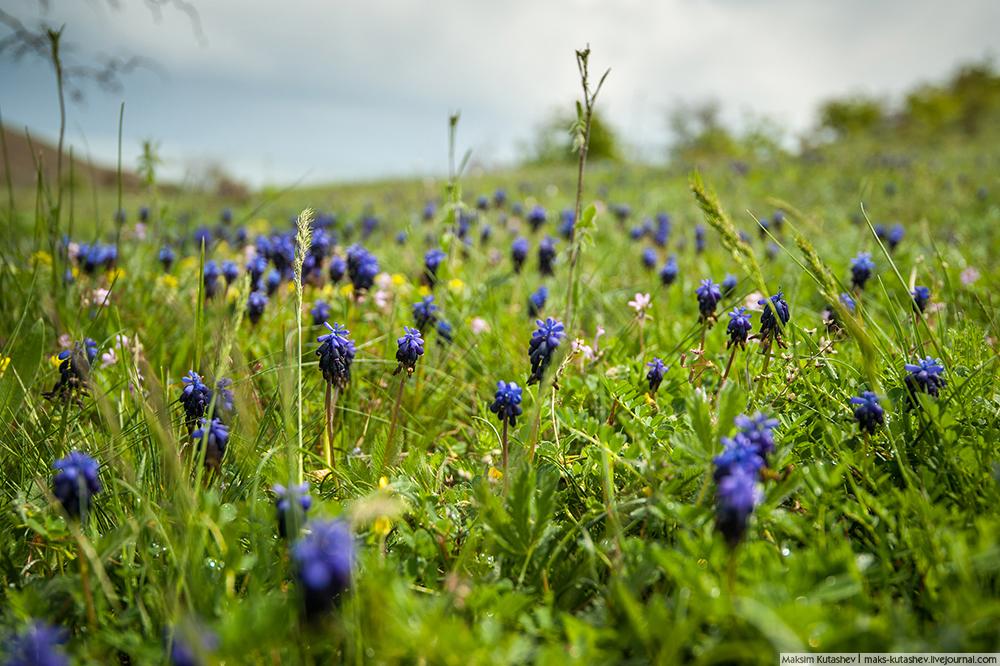 1/12. На Криму је време прелепо готово целе године и зато је вегетација бујна, раскошна и зелена.