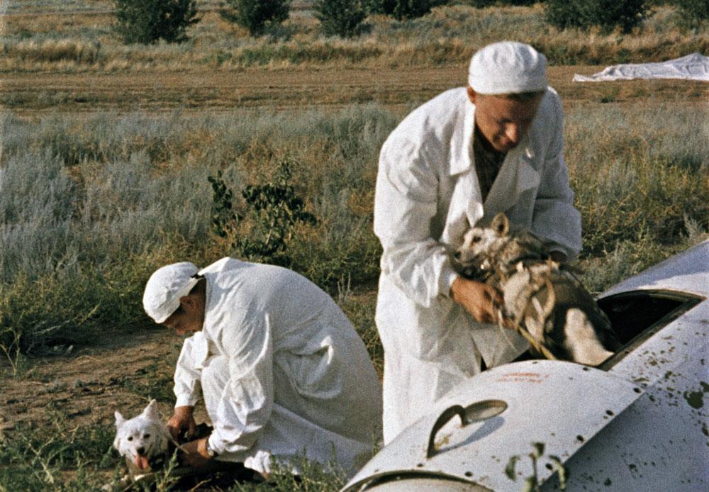 医師が帰還着陸地点で、地球物理ロケット頭部の乗組員室から宇宙犬ベルカとストレルカを降ろす。
