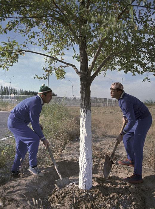 ソ連のヴィクトル・ヴァシリエヴィチ・ゴルバトコ宇宙飛行士とヴラジスラフ・ニコラエヴィチ・ボルコフ宇宙飛行士が、初の宇宙飛行士ユーリ・ガガーリンの植えた木を世話する。