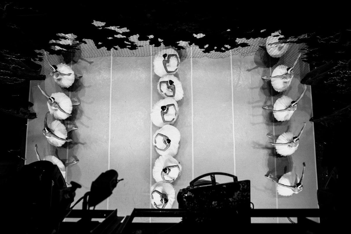 リハーサル中の白鳥たち。