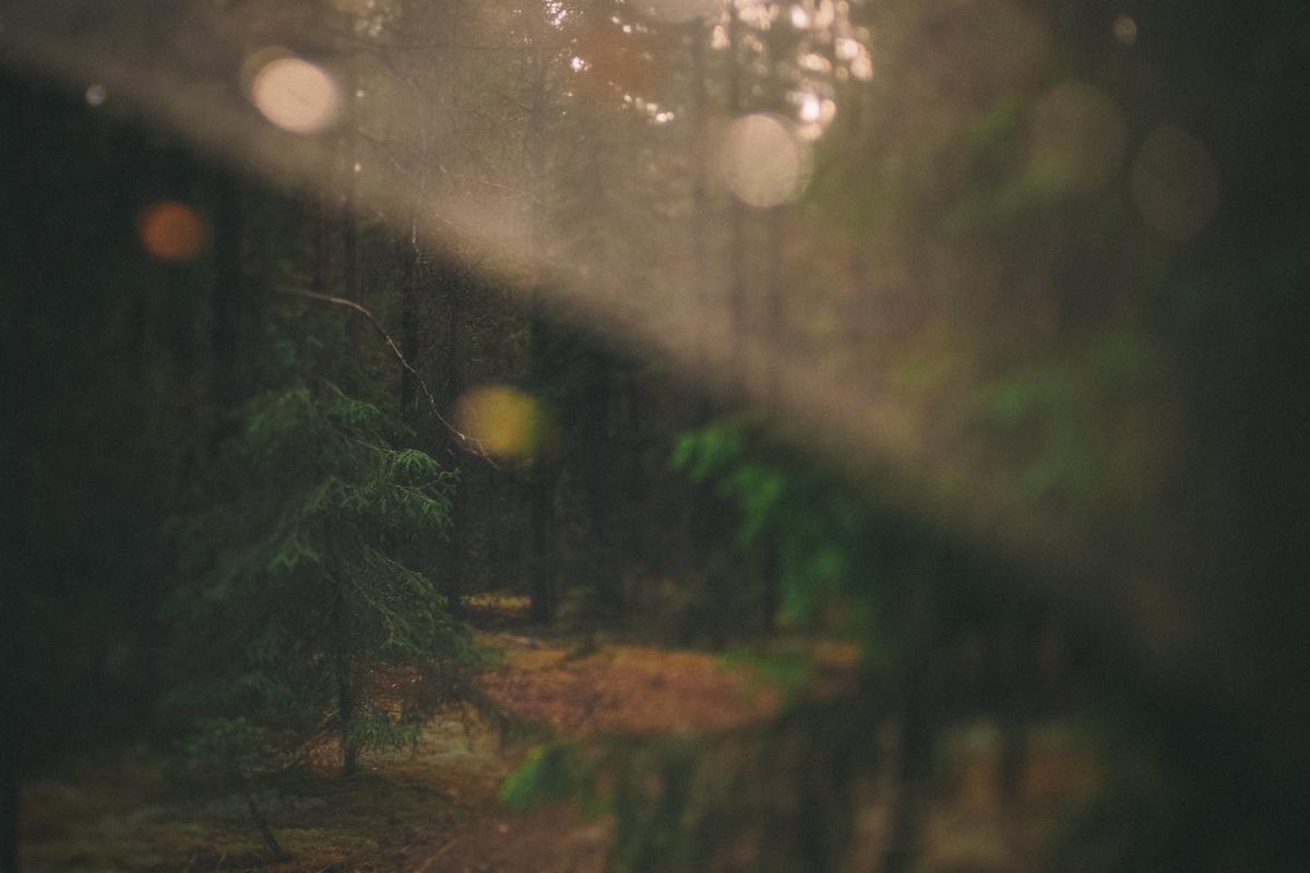 ここには、カバノキにトウヒ、モミとマツが絡まった、不思議な形をした樹齢400年の木々が生育している。このような形状が自然に形成されることはない。「コミの古代の住人は、木々を崇拝していました。私たちが現在目にしているのは、おそらく彼らの手によるものです」とスミリンギス氏は説明する。