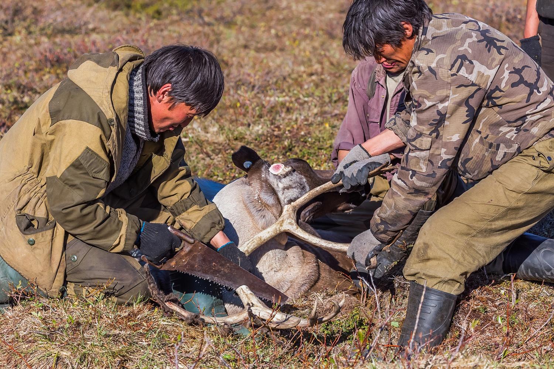 Ovo su unajmljeni pastiri koji rade u dolini rijeke Čibalah u Jakutiji. Taj tip posla nasljeđen je još od sovhoza iz sovjetskog sistema.
