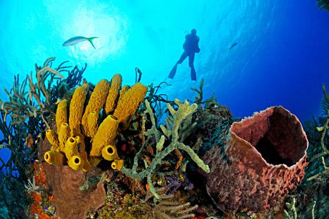 """Находката на """"морските"""" учени показва, че лекарствената устойчивост на раковите клетки може да бъде преодоляна."""