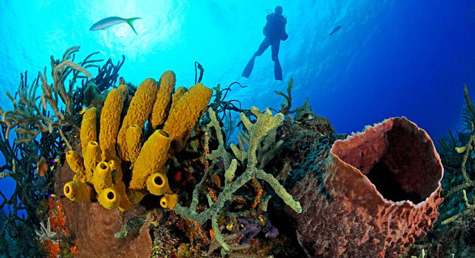 Récif coralien avec une éponge de mer.