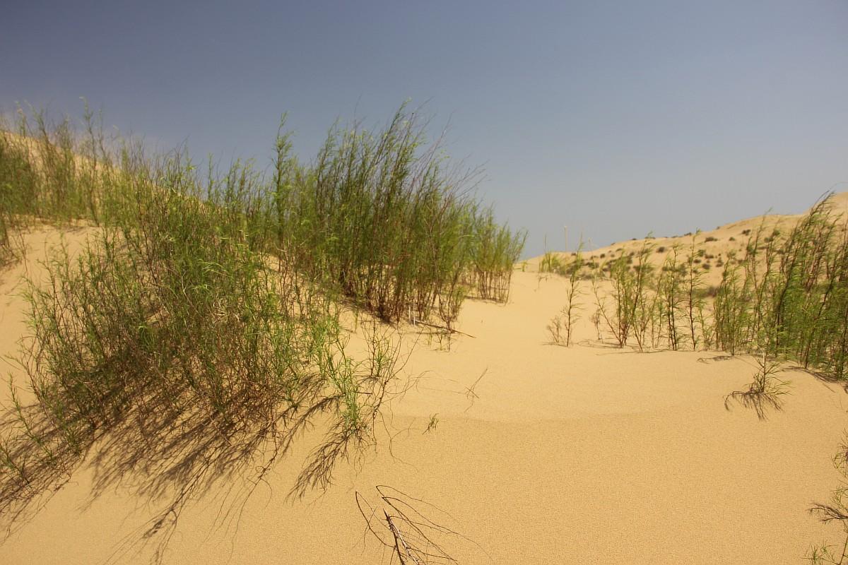 この砂丘の最も重要な科学的探検は、1915年にロシア人植物学者のA・A・マヤロフによって着手された。砂でできた山であるサリクムの形状は常に変化しているが、砂が飛散することはない。