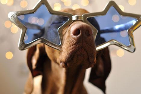 Apakah hewan peliharaan Anda adalah kosmonot anjing berikutnya?