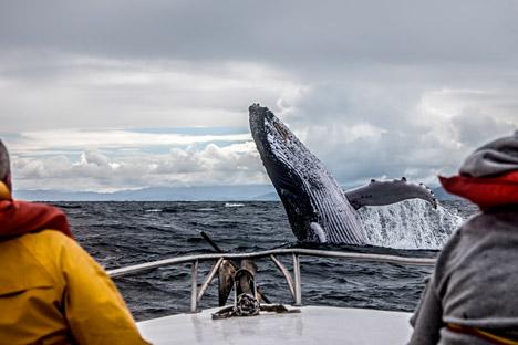 Il n'est pas trop tard de profiter des journées ensoleillées pour nager, pratiquer des sports nautiques observer les baleines grises.