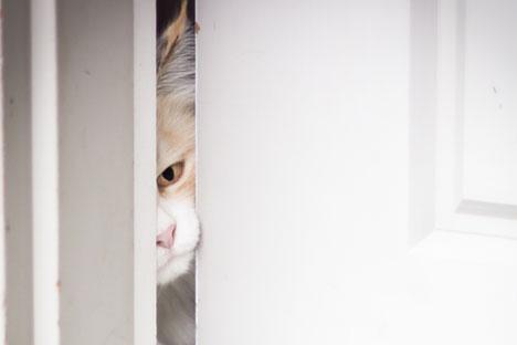 Beaucoup de Russes pensent que si c'est un chat qui entre le premier dans un appartement, la vie y sera confortable et heureuse.