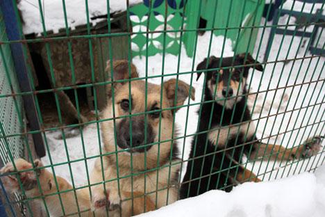 Não existem dados oficiais sobre o número total de animais de rua na Rússia, mas especialistas veterinários estimam que sejam milhões de gatos e cachorros sem dono.
