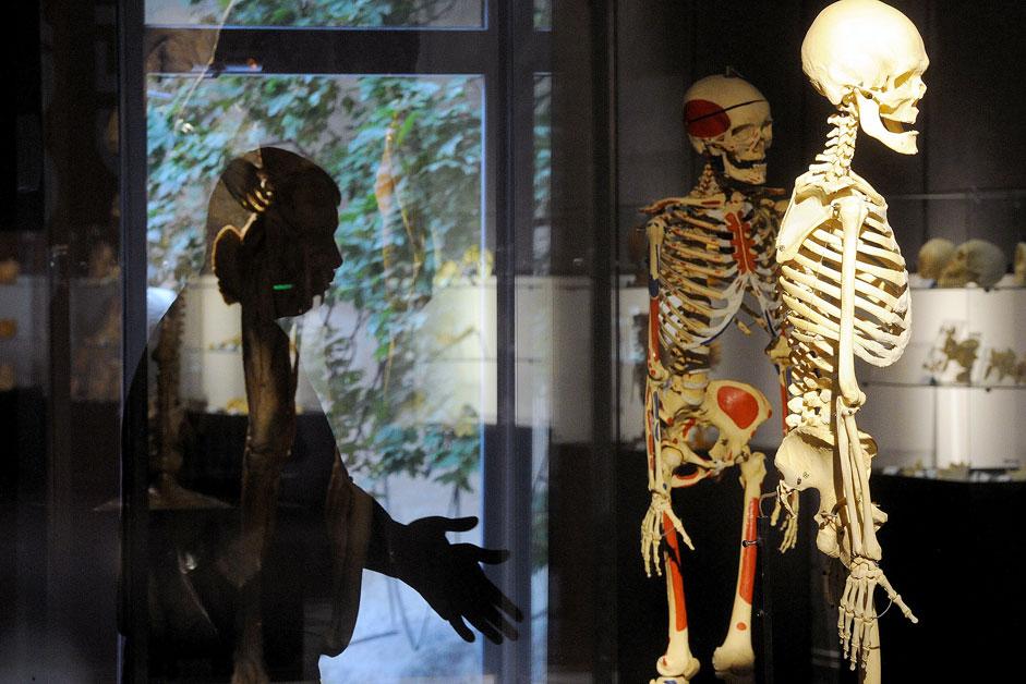 """Auf der Ausstellung """"Human Body"""" in Sankt Petersburg bestehen alle Exponate aus organischen und polymeren Komponenten."""