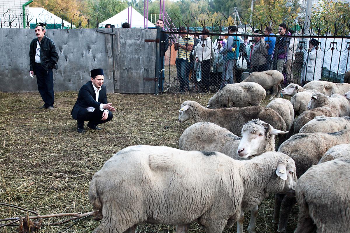 """Segera setelah salat Idul Adha, umat Islam keluar untuk melakukan ritual pengurbanan. Hanya di Kazan ada sebanyak 17 wilayah yang melayani penyembelihan hewan kurban. Keluarga Ismail melaksanan ritual tersebut di tempat khusus yang disediakan di halaman masjid """"Yardem""""."""