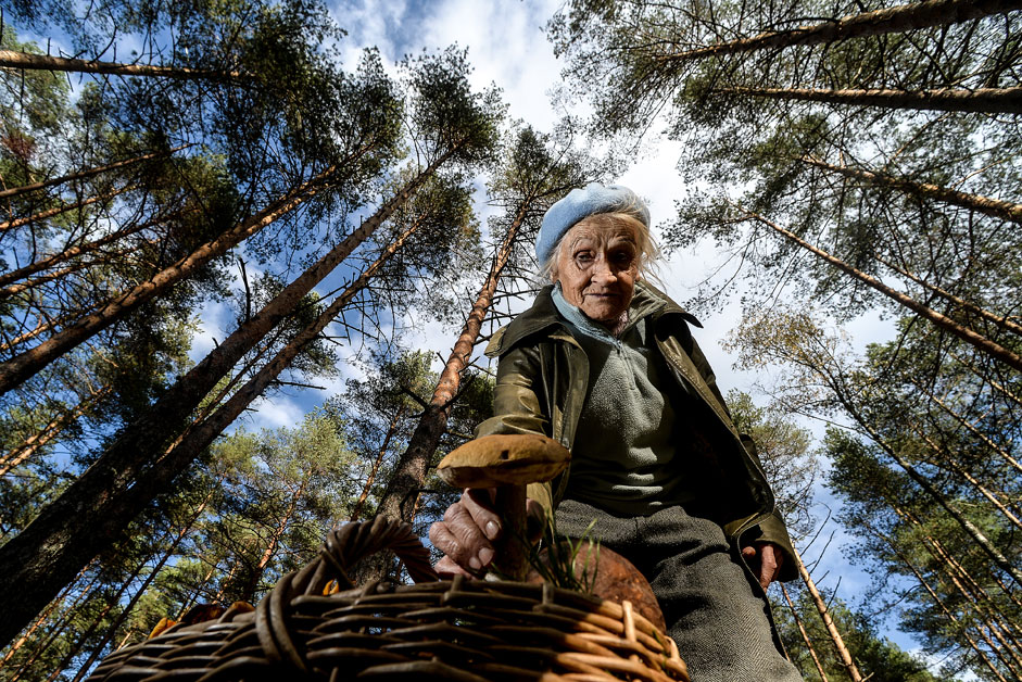 A resident of the Novgorod Region picks mushrooms in a forest.