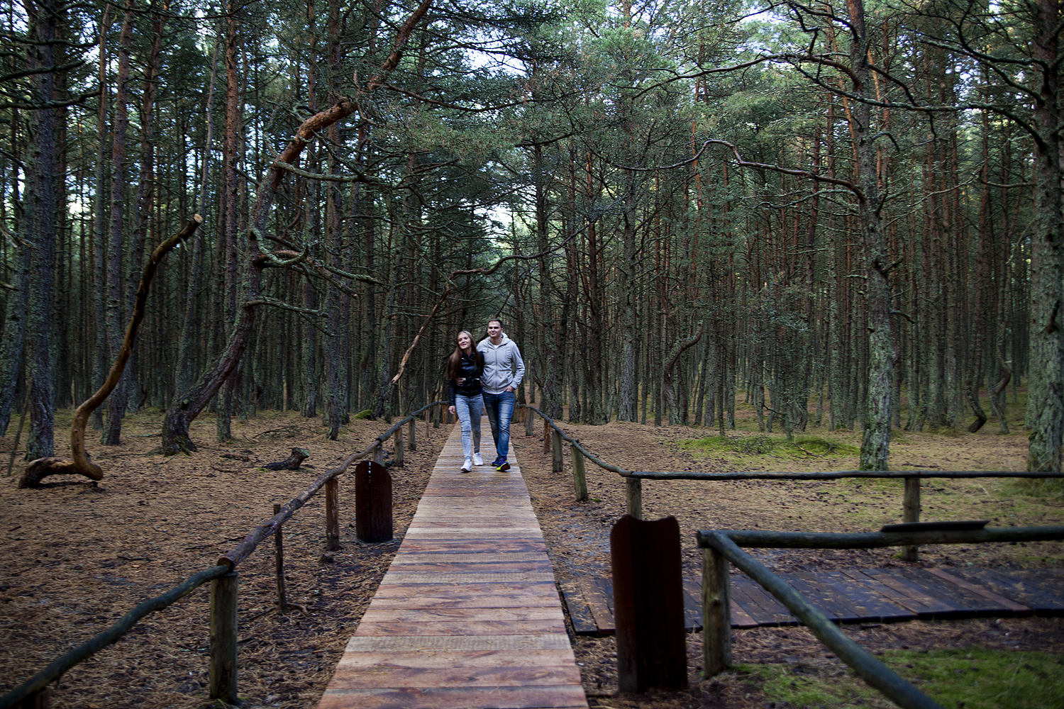 There are routes through the forest: the main one is built like a boardwalk. Leaving the trails is not recommended as the forest abounds in ticks (tourist paths are treated with a special tick-repellent solution).