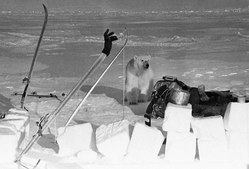 永久凍土層の熱狂的な愛好家でない限り、ラプテフ海に位置するマールイ・タイミル島を魅力に感じる人はまずいないであろう。そこに原生するコケや地衣類を観察しにこの島に向かうことを決意したとしても、その斜面はほぼ1年中積氷に覆われているという事実に直面しなければならない。面白いことに、この不毛の地が発見されたのは1913年のことで、当初はニコライ2世の息子であるアレクセイ皇太子の名が付けられていた。//1972年。セヴェルナヤ・ゼムリャ諸島のソ連科学者部隊のキャンプに近づくホッキョクグマ