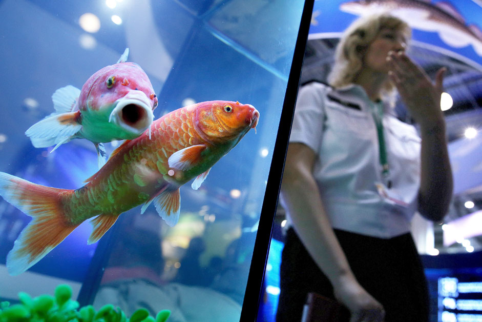 "Russia. Moscow region. 8 October 2015. The aquarium with fish at the 17th Russian Agricultural Exhibition ""Golden Autumn"" in the international exhibition center ""Crocus Expo""."