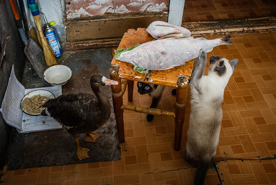"""""""Makanan lokal yang harus Anda coba adalah stroganina, yaitu ikan atau daging yang baru dibekukan, salah satu makanan utama dalam hidangan utara. Ia disajikan beku dan diiris tipis. Porsinya sangat kecil jadi ia tak akan meleleh. Anda bisa mencobanya dengan 'saus' — garam dicampur lada. Sangat lezat!"""""""