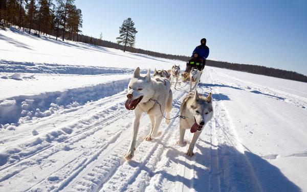 Riding a dog Foto: Alamy / Legion-Media
