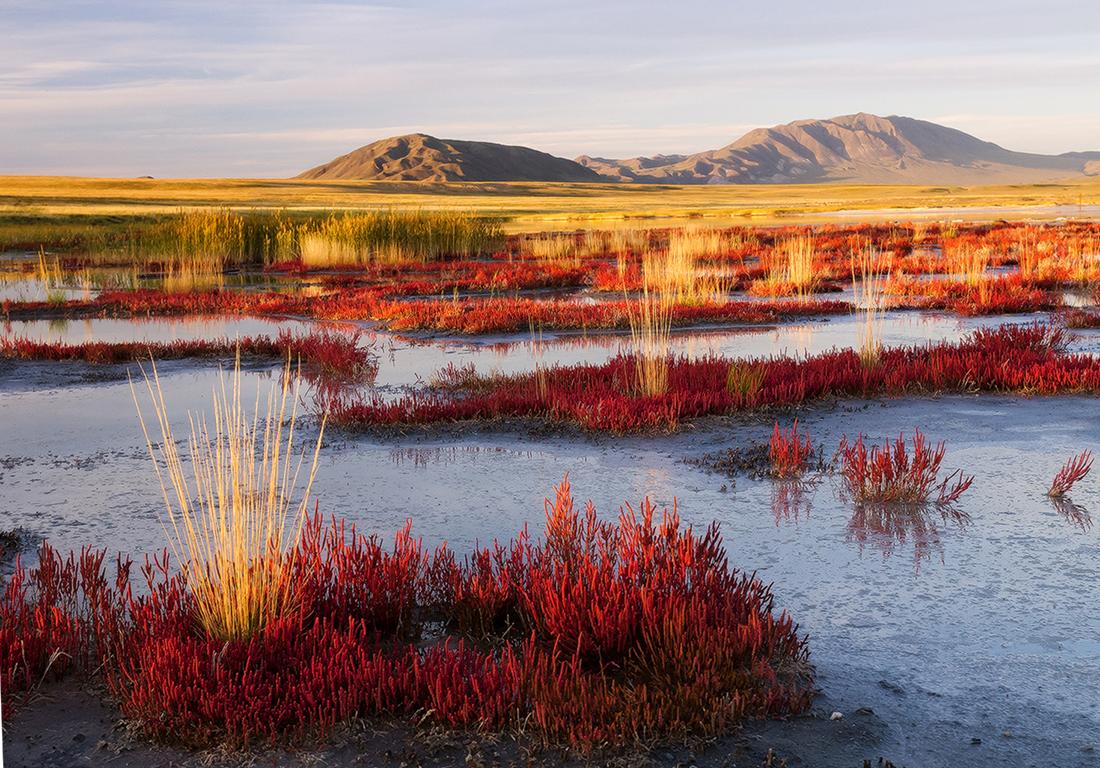 遠隔地にあるため、アルタイ山脈の自然の保存状態はきわめて良好だ。