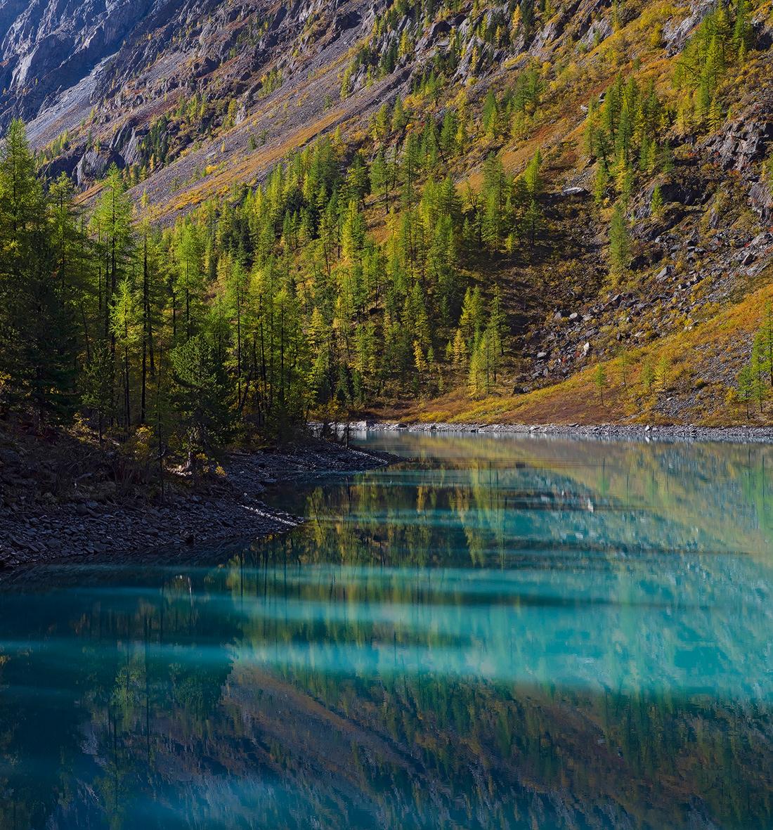 アルタイ山脈の自然は慎重に保護されているため、この地域には薬用植物がまだ生育している。