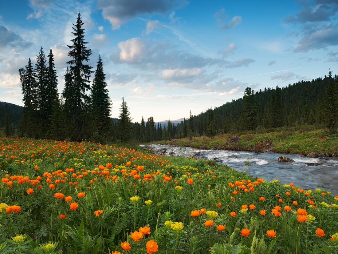 モンゴルとカザフスタンの国境があるこの地は、満開の花でいっぱいの草原の上に古いシャーマン宗教や先史時代の岩絵が存在する遺跡となっている。