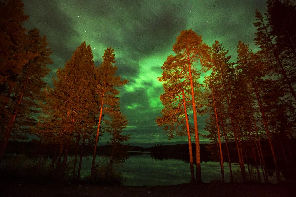 北極光は通常冬に発生するものだが、今年は、どこまでも続くロシア北部の森林が雪に覆われる前に、強力なオーロラが上空を照らし出した。