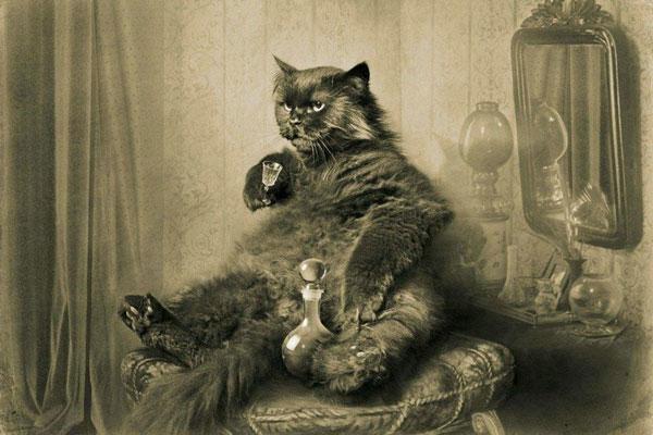 Begemot the cat