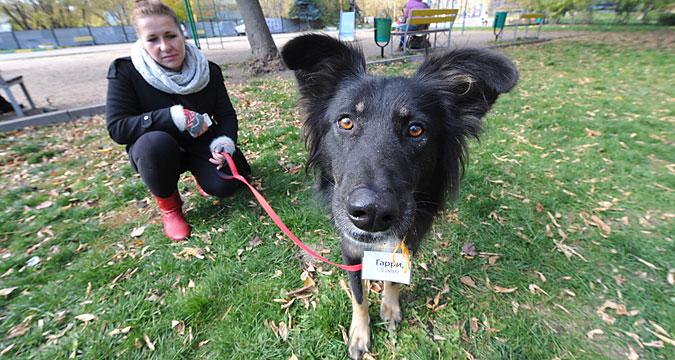 Passeadores encontram em site cães abandonados para dar uma volta