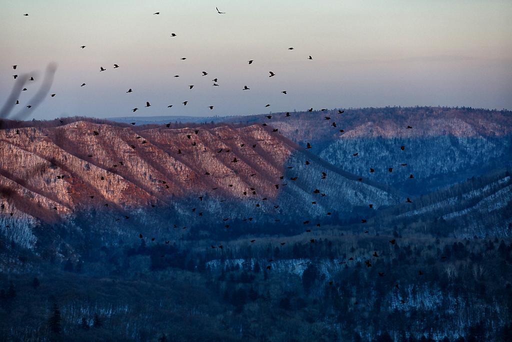 ボリソフ高原上空を飛ぶカラス