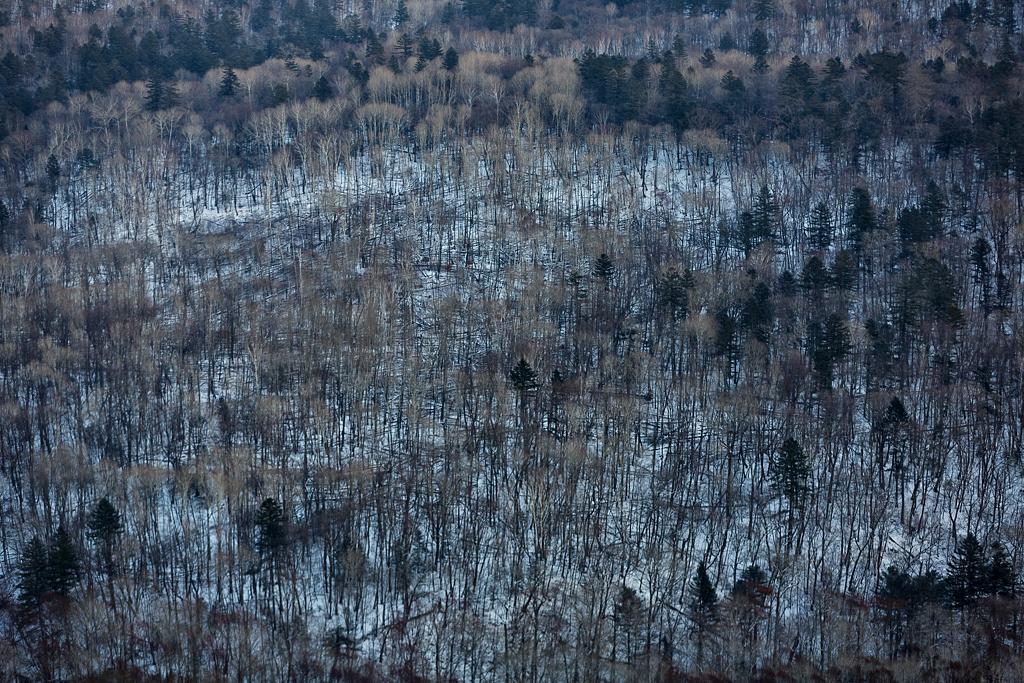 国立公園「ヒョウの地」