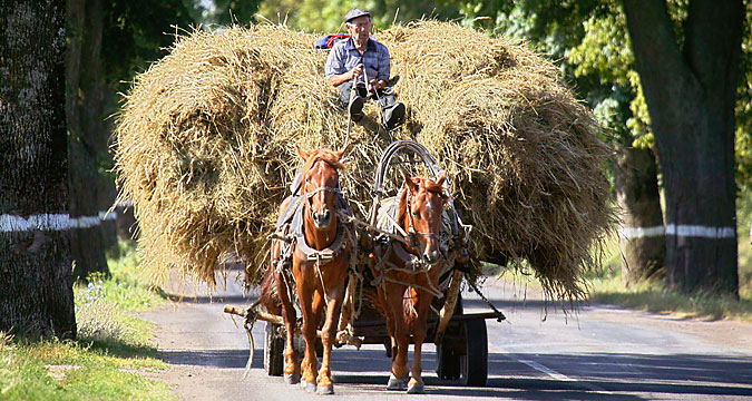 Russian farmer in Kaliningrad.