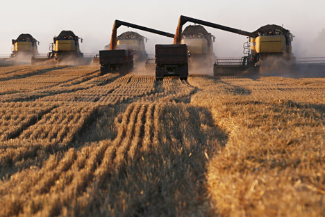The basis of the Russian agricultural exports is formed by crops, vegetable oil, meat, poultry, fish and seafood.