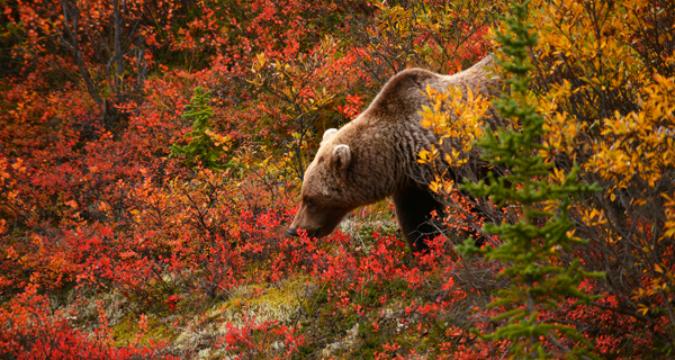 За да сме сигурни, че едно пътуване в руската гора ще остави само добри впечатления...