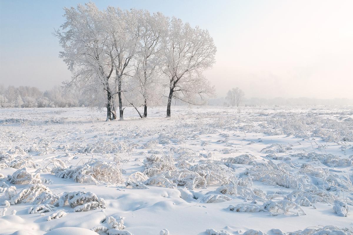 Благодарение на своята отдалеченост природата на Алтай е добре запазена. / Красноярск, остров Татишев.