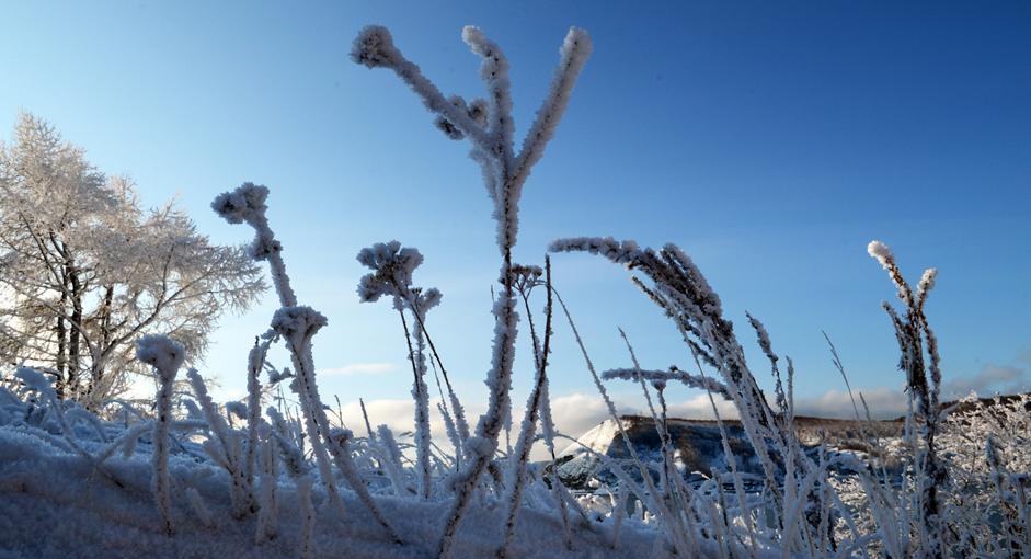 Rerumputan tertutup salju di tepi Danau Baikal, Provinsi Irkutsk, Rabu (24/12/14).