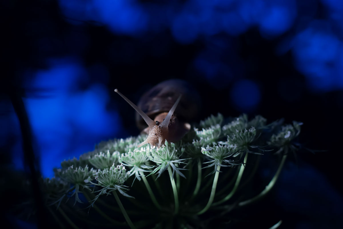Young talents nomination. / A snail during an evening walk.