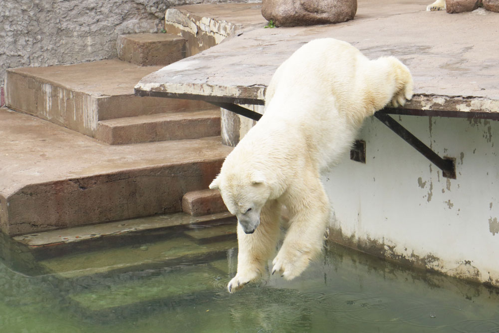 In the 1930s it was the first zoo where polar bears mated in captivity.