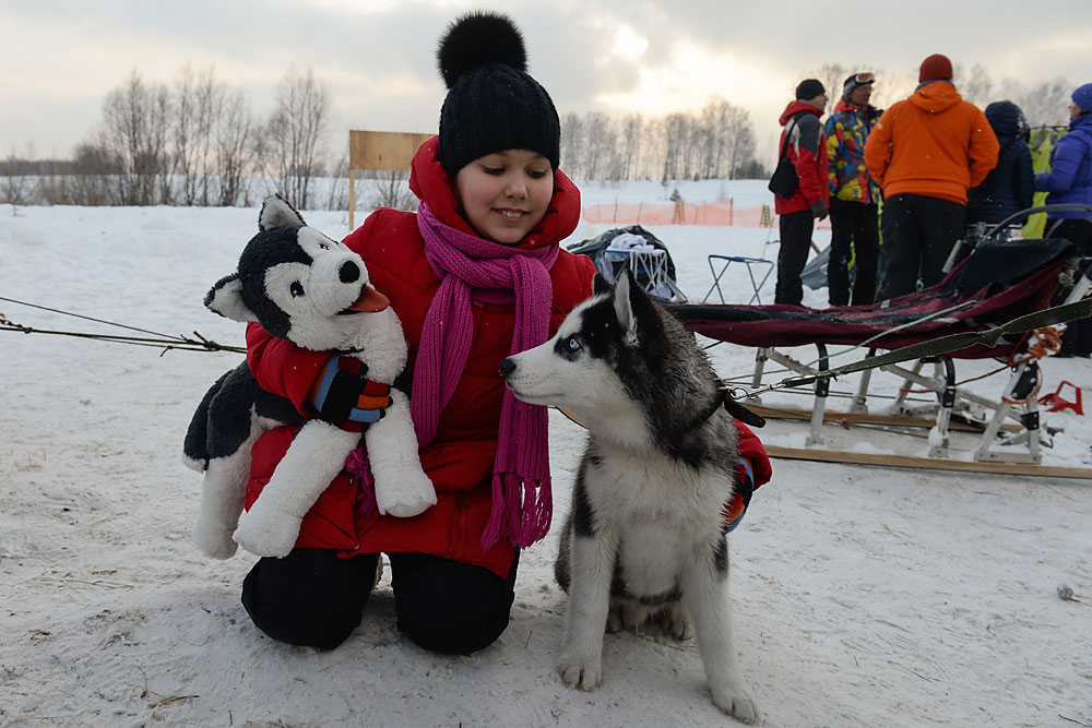 "A girl plays with a dog during the ""Husky Fest"" Sled Dog Festival in the village of Stepniy, Novosibirsk region."