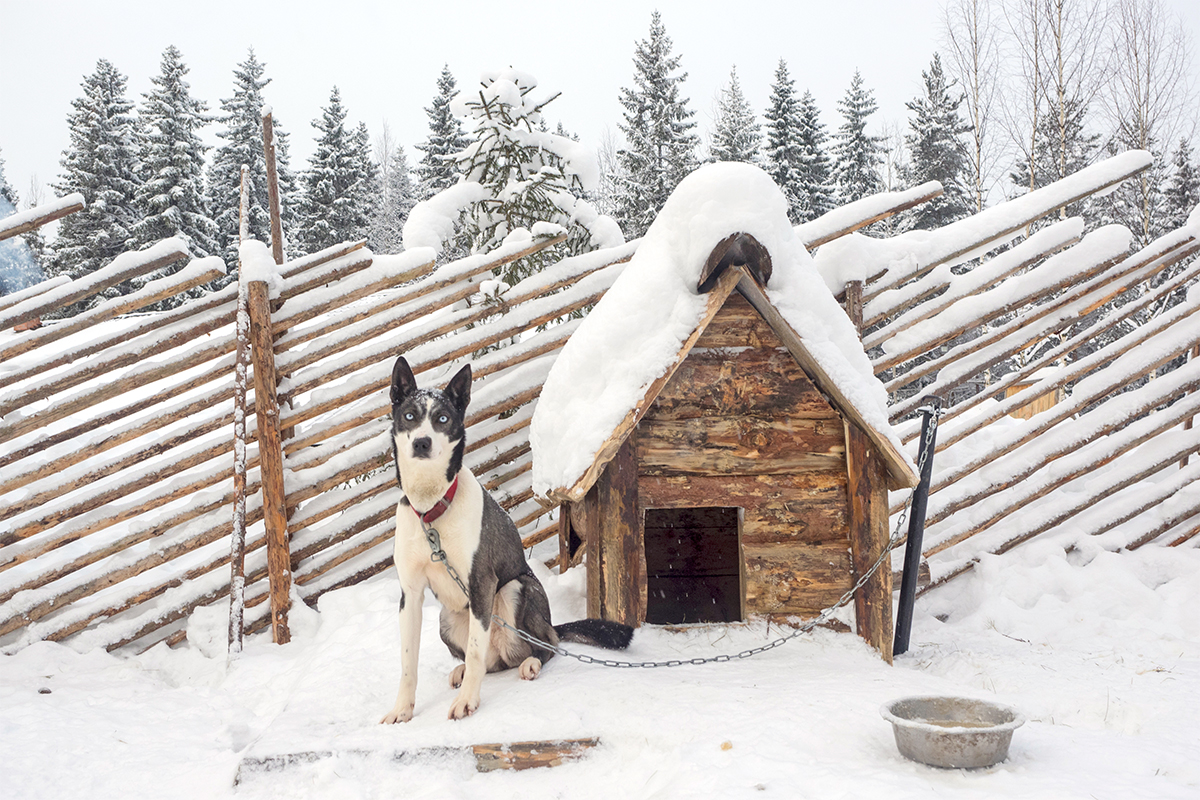 All breeds have great stamina and their comfort temperature is -30°C, so they can live outside even in the coldest months of winter.