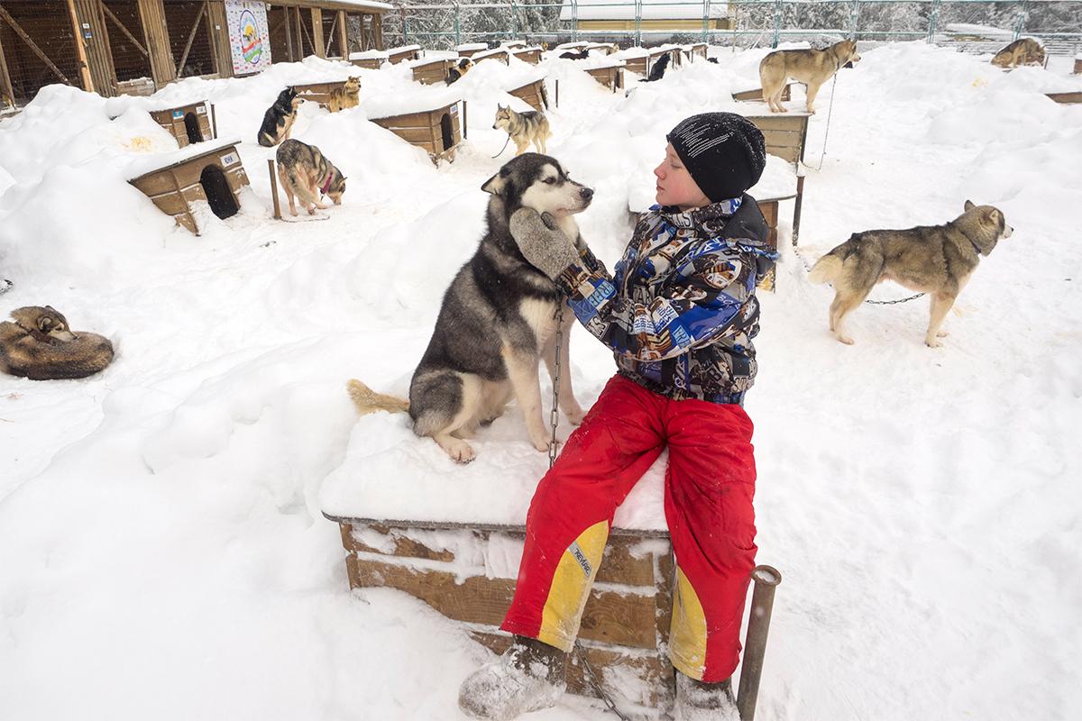 Dirkaški psi živijo skupaj v majhnih lesenih hiškah.