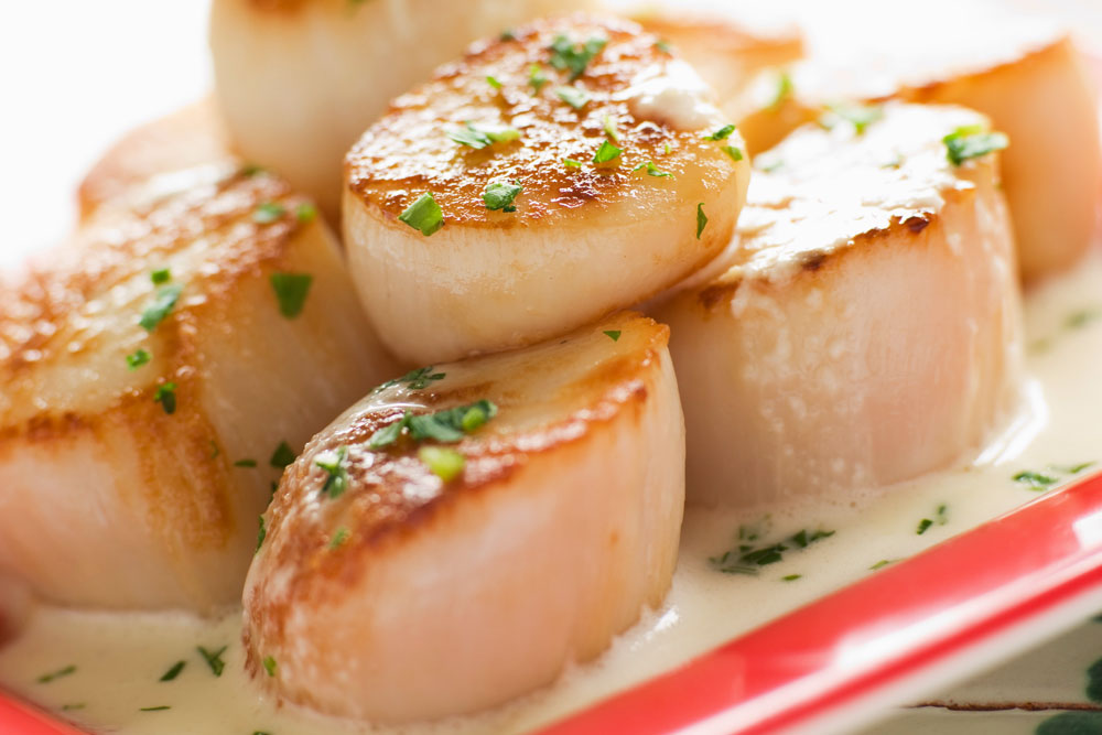 The scallop, a bi-valve, is considered to be the most delicious shellfish.