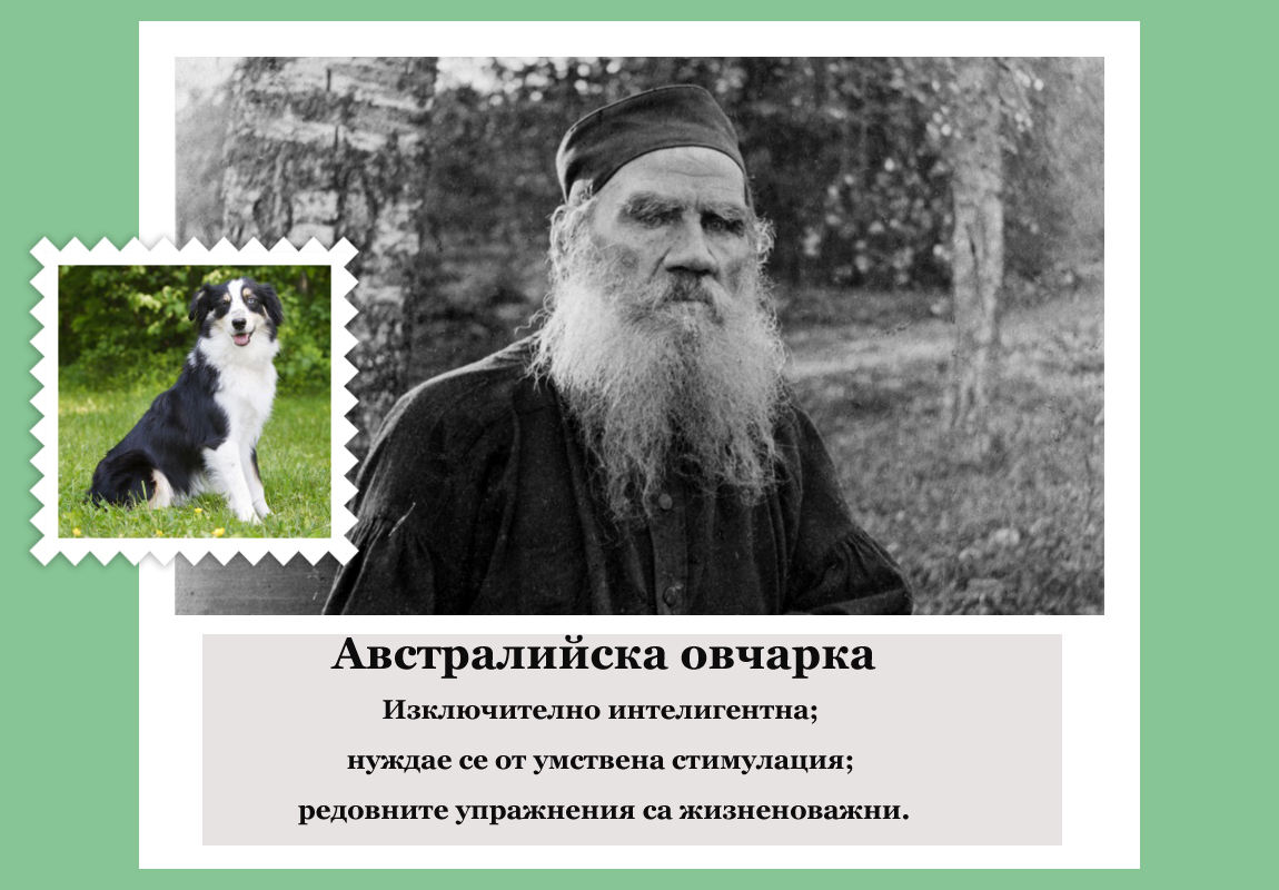 Лев Толстой (руски писател, смятан за един от най-великите автори на всички времена) е австралийска овчарка.