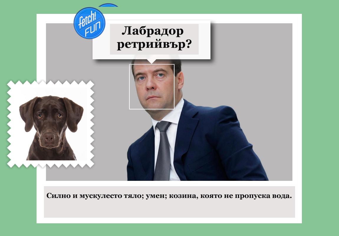 Дмитрий Медведев (десетият министър-председател на Русия) като лабрадор ретрийвър.