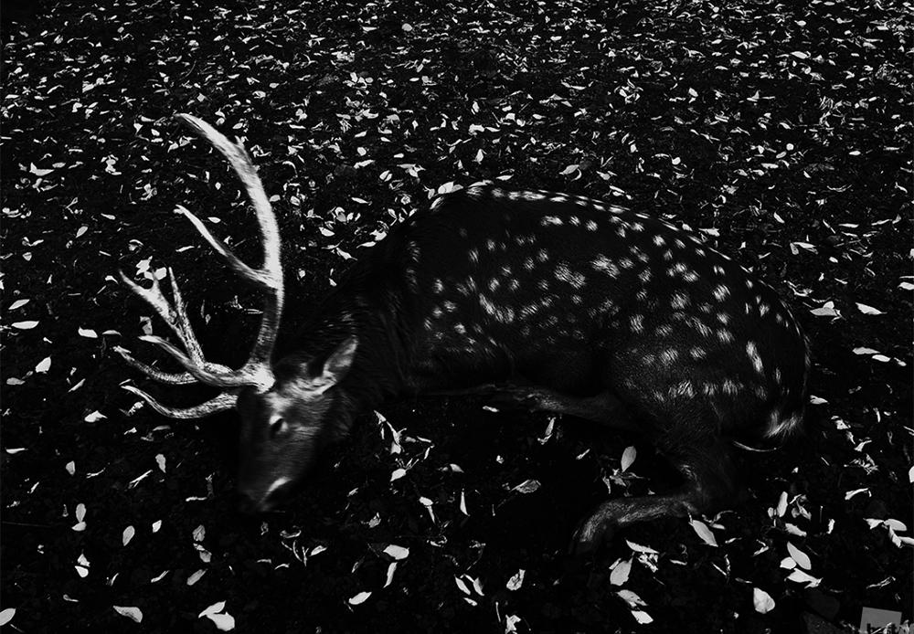 Заспан елен во еден национален парк.