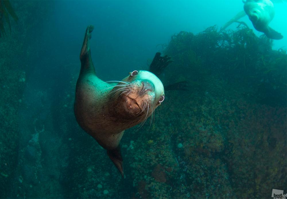 Морски лав позира пред фотоапаратот