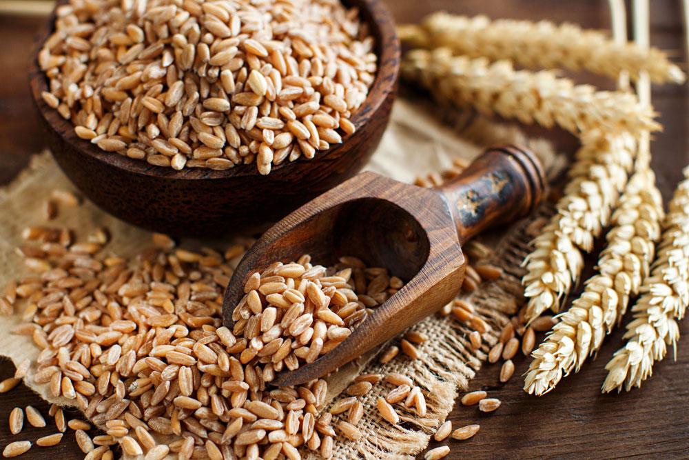 Spelt: rebirth of the healthy grain.