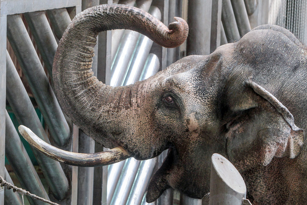 Elephant Museum was opened in the Moscow zoo