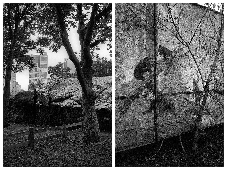 """Ню Йорк – Мъж се катери по скала в """"Сентръл парк"""". / Москва – Репродукция на известната картина на Иван Шишкин """"Сутрин в борова гора""""."""