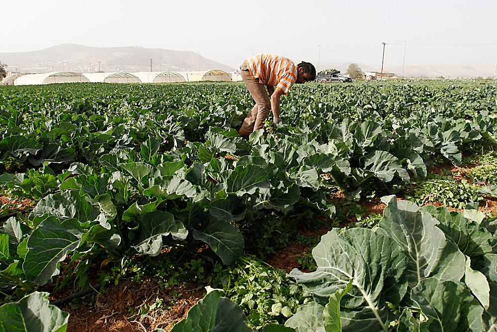 Un fermier syrien.